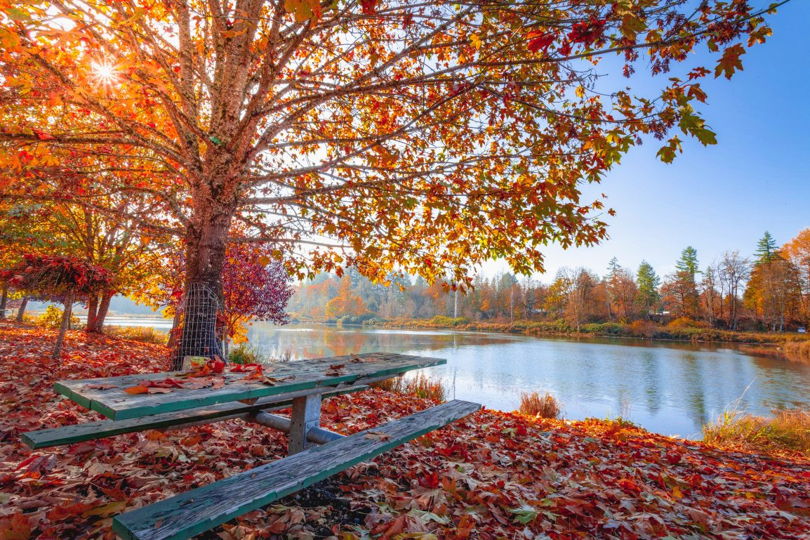 place to sit near the pond in the fall