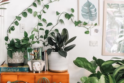 Guide to Houseplants GirlSpring