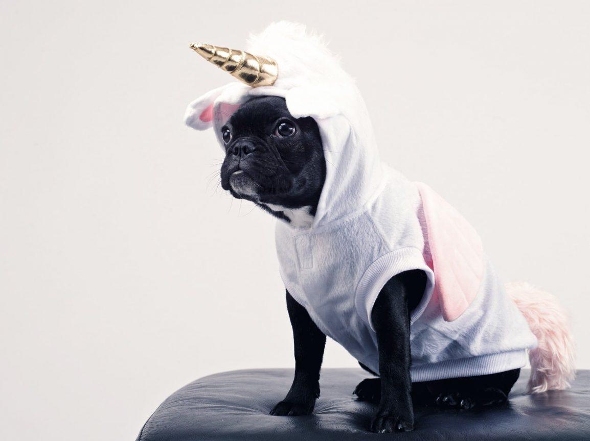 Is it OK to dress up pets